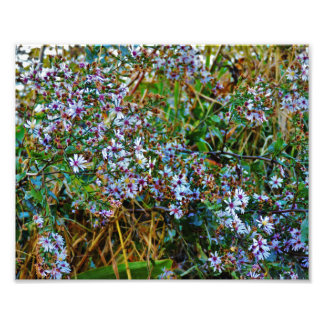 Foto Flores brancas