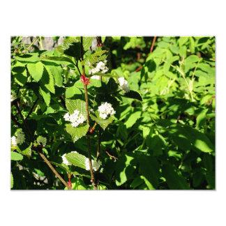 Foto Flores brancas e folhas do verde