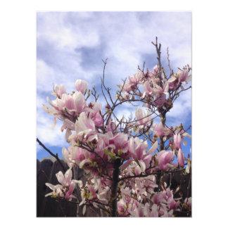 Foto Flores da árvore de tulipa. Soulangeana da
