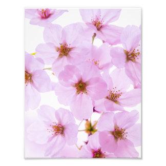 Foto Flores da flor de cerejeira em Tokyo Japão