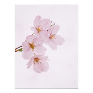 Foto Flores de cerejeira bonitas do primavera em Tokyo
