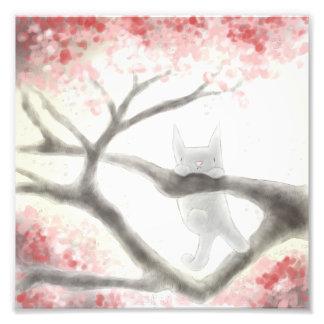 """Foto Gato cinzento pequeno em uma árvore 8"""" x 8"""""""
