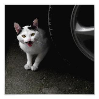 Foto Gato com bigode