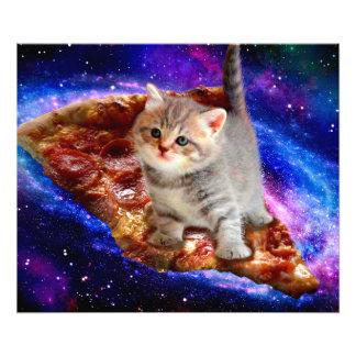 Foto gato da pizza - gatos bonitos - gatinho - gatinhos