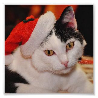 Foto Gato de Papai Noel - Feliz Natal - gato do animal