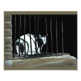 Foto Gato do impressão da arte que senta-se atrás dos