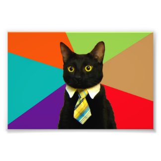 Foto gato do negócio - gato preto