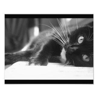 Foto Gato preto e branco
