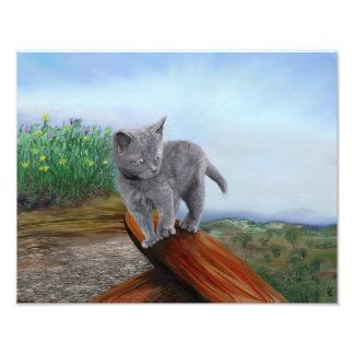 Foto Gato scaredy bonito do gatinho cinzento do