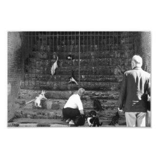 Foto Gatos dispersos no turista do gato da rua de
