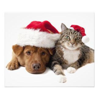 Foto Gatos e cães - gato do Natal - cão do Natal