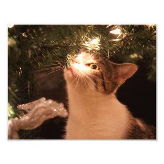 Foto Gatos e luzes - gato do Natal - árvore de Natal
