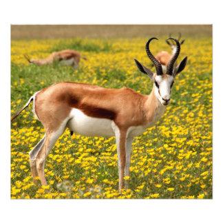 Foto Gazela no prado