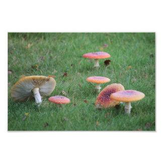 Foto Gramado do cogumelo do outono