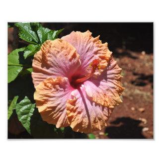 Foto Hibiscus havaiano