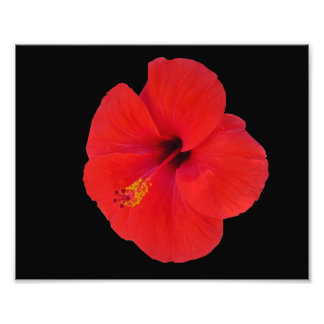 Foto Hibiscus vermelho