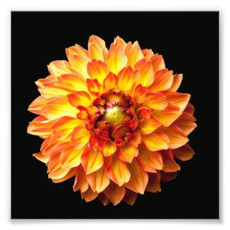 Foto Impressão 6x6in da flor da dália