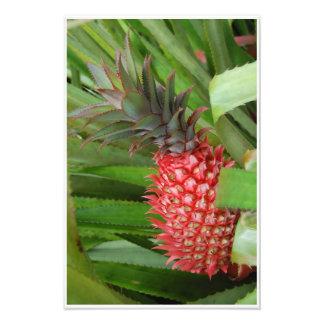 Foto Impressão cor-de-rosa do abacaxi