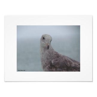 Foto Impressão curioso do pombo