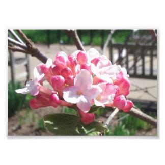 Foto Impressão da flor