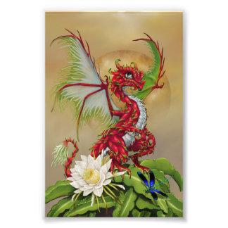 Foto Impressão do dragão 4x6 da fruta do dragão