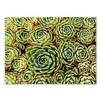 Foto Impressão dos Succulents