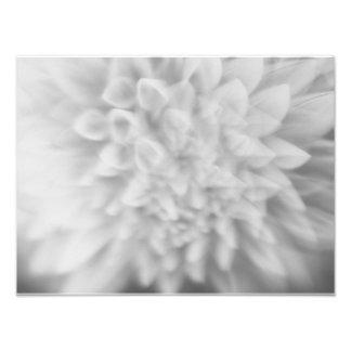 Foto Impressão preto e branco floral abstrato da dália