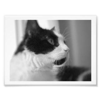Foto Impressões do gato!