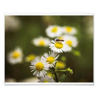 Foto Inseto na flor branca