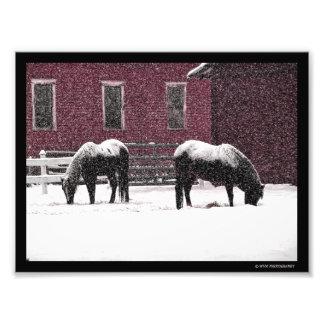 Foto Inverno que pasta
