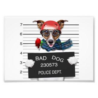Foto Jaque engraçado russell, cão do Mugshot