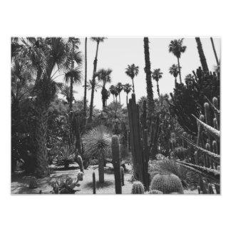 Foto Jardins tropicais dos cactos pretos & impressão