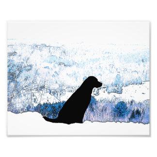 Foto Labrador preto - em cima de uma montanha