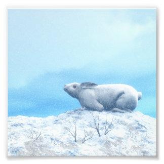 Foto Lebre ártica, lepus ártico, ou coelho polar