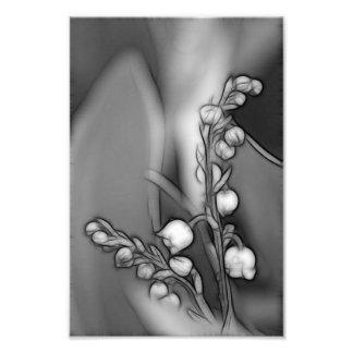 Foto Lírio das flores do vale