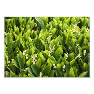 Foto Lírio do remendo da flor do vale