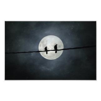 Foto Lit dos corvos pela lua Slivery
