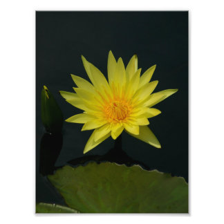 Foto Lotus amarelo Waterlily