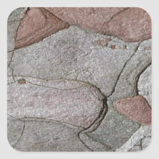 Foto macro do latido do pinho adesivo quadrado