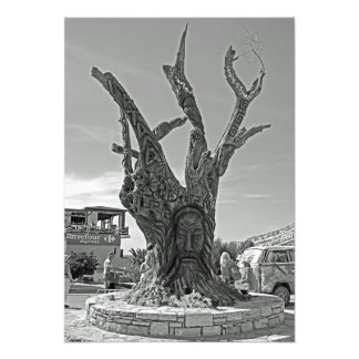 Foto Matala. Uma árvore na memória dos hippies.
