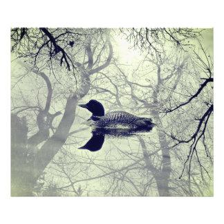 Foto Mergulhão-do-norte preto e branco em um impressão