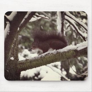 Foto Mousepad do inverno do esquilo