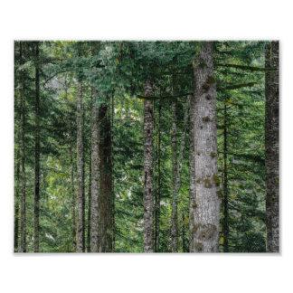 Foto Nas madeiras