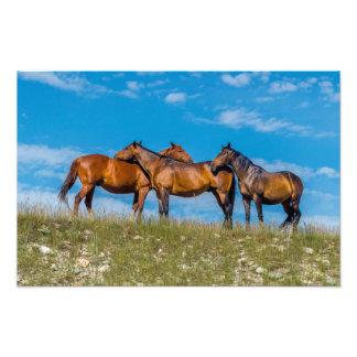 Foto Noivo de três cavalos em um prado