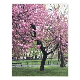 Foto Nova Iorque cor-de-rosa bonito da árvore NYC da