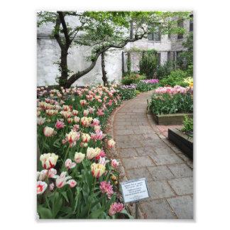 Foto Nova Iorque NYC da tulipa do jardim da comunidade
