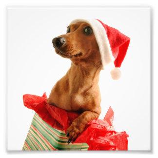 Foto O papai noel do Dachshund - cão do papai noel -