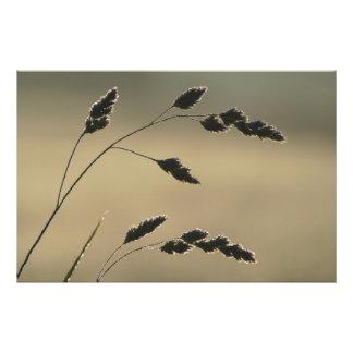 Foto Orelha molhada da grama