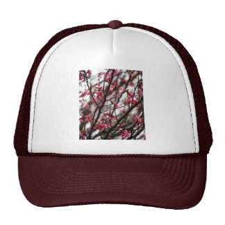 Foto original do macro das flores de cerejeira boné