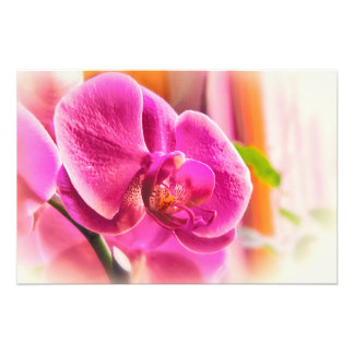 Foto Orquídea difundida